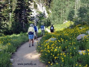 03-Hiking-Through-Yellow-Flowers